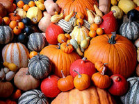 Lots_of_pumpkins